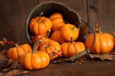 4 Fun Facts About Pumpkins