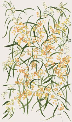 Painted designs featuring Australian native flowers and plants can wattle work black and white? Australian Wildflowers, Australian Native Flowers, Australian Plants, Australian Art, Australian Garden Design, Botanical Drawings, Botanical Prints, Floral Prints, Plant Aesthetic