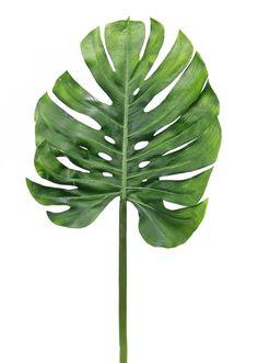 몬스테라(monstera) 액자 포스터 식물이미지 자료 : 네이버 블로그