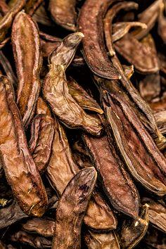 Dried Carob by Lindley Johnson