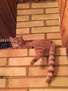 Laiskottaa. Lazy Cat.