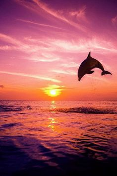 lori-rocks:     Bottlenose Dolphin, Jumping out of the water in Puerto Vallarta by Rene' Frederick, ~edit via~Lori
