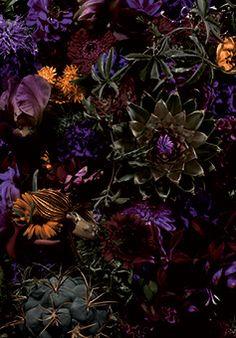 Makoto Azuma, Shunsuke Shiinoki photo exhibition 2012 Flowers - all those wonderful jewel tones! Dark Flowers, Exotic Flowers, Love Flowers, Beautiful Flowers, Wedding Flowers, Night Flowers, Wild Flowers, Art Floral, Floral Design