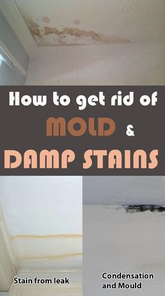 How to get rid of mold and damp stains - 101CleaningTips.net