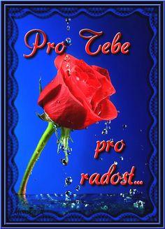 Pro Radost Good Morning, Illustration Art, Neon Signs, Night, Flowers, Motto, Owl, Humor, Facebook