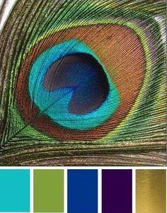 Indian Wedding On A Budget Color Schemes Ideas For 2020 Room Color Schemes, Room Colors, House Colors, Peacock Color Scheme, Colour Pallette, Peacock Paint Colors, Peacock Living Room, Motifs Art Nouveau, Peacock Images
