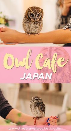 Visiting the Owl Cafe in Akihabara, Japan was the coolest experience!: