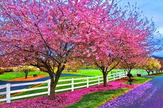 amazing.quenalbertini: Spring nature HD&3D Photos via Pics4world / google search