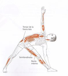 You need control to meet your weight loss goals! Yoga for Meditation Yoga Ashtanga, Yoga Kundalini, Iyengar Yoga, Yoga Meditation, Pranayama, Human Muscular System, Yoga Muscles, Yoga Drawing, Yoga World
