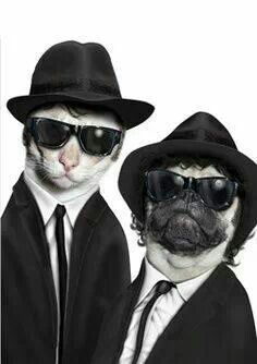 Cat and dog dressed in suits ..