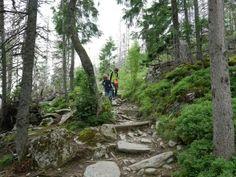 Wandern mit Kindern in der Slowakei - die Hohe Tatra eignet sich da hervorragend.