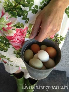Growing Portable Forage for Urban Chickens - Homegrown Eggs (for when we eventually have a place where we can raise chickens)