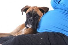 Getting ready for a new baby and wondering how your first baby (your dog baby) is going to react? We asked an expert how to prepare.