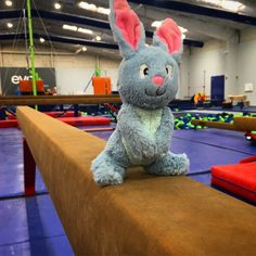 On Competitive Parenting and How It Undermines the Effort to Raise Kind, Successful Bunnies.