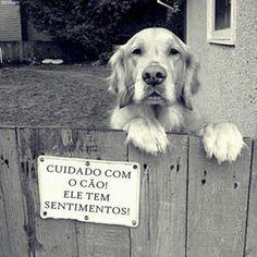 """""""Cuidado com o cão! Ele tem sentimentos"""" #Animais #AdoteNaoCompre"""