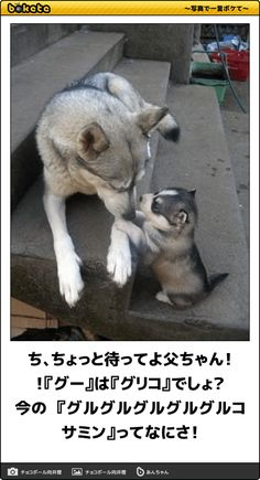 ち、ちょっと待ってよ父ちゃん!!『グー』は『グリコ』でしょ?今の 『グルグルグルグルグルコサミン』ってなにさ! Animals And Pets, Funny Animals, Cute Animals, Japanese Funny, Illustrations And Posters, Animal Design, Cute Photos, Funny Cute, Cat Lovers