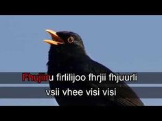lintukaraoke - YouTube Closer To Nature, Picture Video, Birds, Videos, Youtube, Movie Posters, Pictures, Diy, Photos