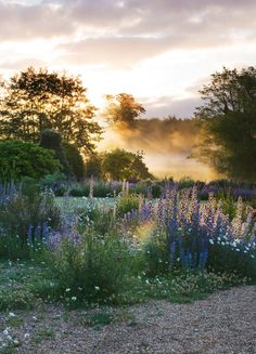 Narborough Hall, Norfolk: Dawn Light On The River Nar And The Gravel Garden In Front Of The Hall by Clive Nichols Paradise Garden, Dream Garden, Norfolk, Beautiful Landscapes, Beautiful Gardens, Gravel Garden, Paradise Found, Blue Garden, Garden Inspiration