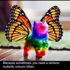 Because we all need a butterfly rainbow unicorn kitten!
