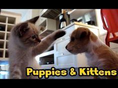 Just Puppies and Kittens.