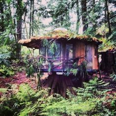 The Latest Addition to the Homestead: The Stump House  Sunray is starting his magical forest retreats with the renovation of the stumphouse. This little hermitage is located in the heart of a second growth stand of huge cedar and fir trees.  This off the grid retreat overlooks the new trout pounds, has available a sauna, composting toilet, and a two story tree house pavillion. For vacation rental inquiries email us atsunray@sunraykelley.com