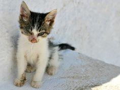 Hurt kitten in Maldives