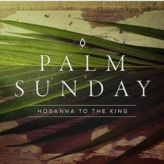 """""""The next day the large crowd that had come to the feast heard that Jesus was coming to Jerusalem. So they took branches of palm trees and went out to meet him crying out Hosanna! Blessed is he who comes in the name of the Lord even the King of Israel! And Jesus found a young donkey and sat on it just as it is written Fear not daughter of Zion; behold your king is coming sitting on a donkey's colt! His disciples did not understand these things at first but when Jesus was glorified then they…"""
