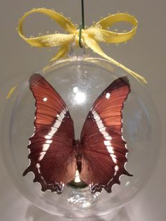 """Siproeta epaphus"" from Argentina      Clear ornament. 80 mm $15.00 US"