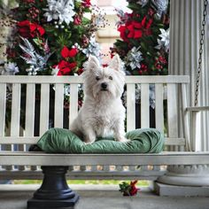 Porch Dogs | The Bark - Dixie the Westie on her porch