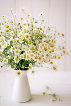 A bouquet of camomile flowers in pitcher by Pixel Stories for Stocksy United - Blumen My Flower, Flower Power, Beautiful Flowers, Beautiful Things, Spring Flowers, Wild Flowers, Daisy Flowers, Flowers In A Vase, Bouquet Of Flowers