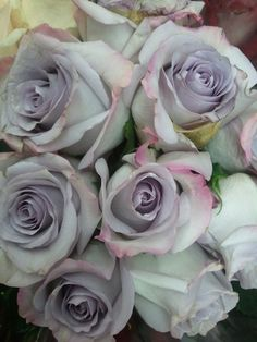 Gray roses (one in particular is called the Karl Lagerfeld) flowers