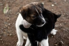 How to Train Puppies -- via wikiHow.com