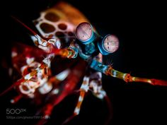 Affirmative by diverstef #nature #photooftheday #amazing #picoftheday #sea #underwater