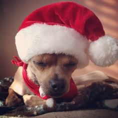 Dodo de Noël