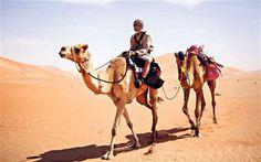 l'Arabie Saoudite importe des chameaux d'Afrique et d'Australie
