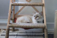 Pour le bonheur de votre chat : arbre à chat avec hamac !