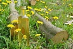 Teraz je ten správny čas na púpavový experiment Stevia, Bottle, Health, Outdoor Decor, Experiment, Gardening, Syrup, Health Care, Flask