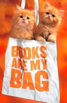 Orange cats, orange tote, orange background. #weloveorange