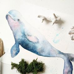 Cute Beluga whales, smallest of the whales, they are social animals and very vocal communicators. Requested by @amandiewangwang to paint this cutie Animals watercolor workshop on 30th July Saturday 2.30-6pm @guacngo. Limited seats available :) So far, I have 3 students who want to learn dolphins, 1 whale, 1 manatee, 2 cat... 1 have not indicated:) #illustration #sgworkshop #workshopsg #workshops #watercolorblog #watercolorist #watercolorillustration #handpainted #sgweekends #sgcafe ...