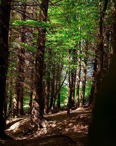 Ticknock Forest . Follow me @patrick.jarina . #forest #hike #hiker #travel #travelblog #travelpic #travels #travelstoke #traveller #ireland #mountains #tourist #adventurer #cool #summer #sun #trees #green #may #wanderlust #photography #photooftheday #photographer #landscape #travelphotography #dublin #picoftheday #beauty #sweet #world Adventurer, Summer Sun, Dublin, Repeat, Ireland, Travel Photography, Wanderlust, Hiking, Trees