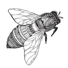 Desenhos Images, Stock Photos & Vectors - Hand drawn honey bee in zentangle style. Black and white vector illustration – stock vector -