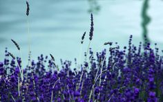 Soft,calming,blue Calming, Joy, Nature, Plants, Blue, Travel, Naturaleza, Viajes, Glee