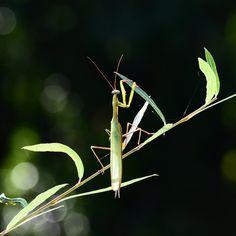 Die Insektenwelt ist in Bedrängnis, und das betrifft nicht nur die restliche Tierwelt, sondern irgendwann auch uns, die wir dafür verantwortlich sind