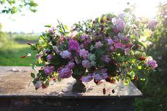 Image result for barlow floret