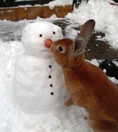 Bunnies LOVE snowmen!