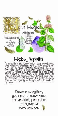 Witchcraft Herbs, Witchcraft Spell Books, Green Witchcraft, Plant Magic, Magic Herbs, Herbal Magic, Herbal Witch, Witch Herbs, Witch Spell Book