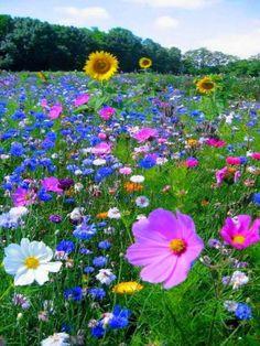 and wild roses. - Sunflowers and wild roses. - Sunflowers and wild roses. Flowers Nature, Wild Flowers, Beautiful Flowers, Purple Flowers, Bouquet Flowers, Summer Flowers, Bouquets, Meadow Garden, Dream Garden