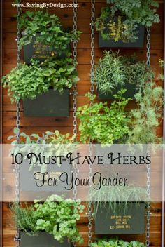 must-have herbs for your herb garden