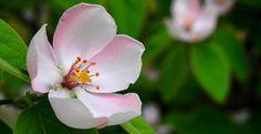 Spring, Pistil, Wood, Flower