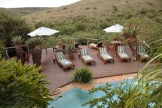 Lalibela Game Reserve and Safari Lodge, Addo Elephant Park, Eastern Cape, South… Elephant Park, Game Reserve, Tree Tops, Outdoor Furniture, Outdoor Decor, Lodges, Sun Lounger, South Africa, Safari